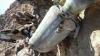 صاروخ حوثي تائه يسقط في ذمار (صورة )