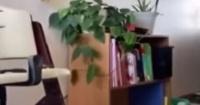 أمريكية توثق لحظة وقوع زلزال آلاسكا وتحرك أثاث منزلها فيديو