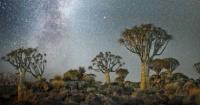 علماء بوكالة ناسا يتوصلون لطريقة جديدة لرسم خرائط الأشجار اعرف إيه هى