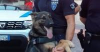 ترقية كلب إلى رتبة مأمور بعد اجتيازه امتحان مكافحة المخدرات فى إيطاليا صور