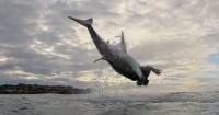 سمكة قرش تنقض على فريستها على ارتفاع كبير فى جزيرة سيشل صور