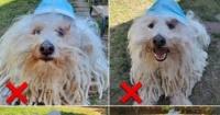 كلب زوكربيرج يشرح الطريقة الصحيحة لارتداء الكمامة فى أسبوع القناع العالمى