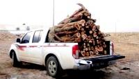 أمن الطرق يضبط 20 شخصا وعدد 20 شاحنة بحمولاتها من الحطب المحلي